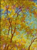 SOLD Gem: Dance of Autumn Leaves, oil on canvas by Frank Balaam at a Scottsdale art gallery